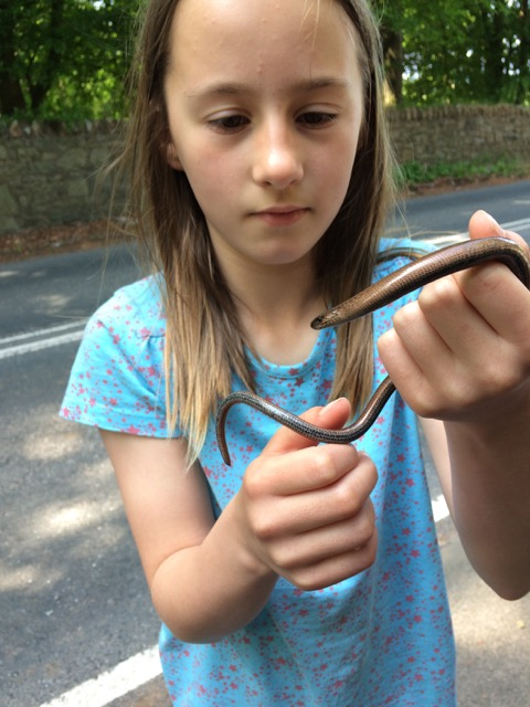 Sam the slow worm
