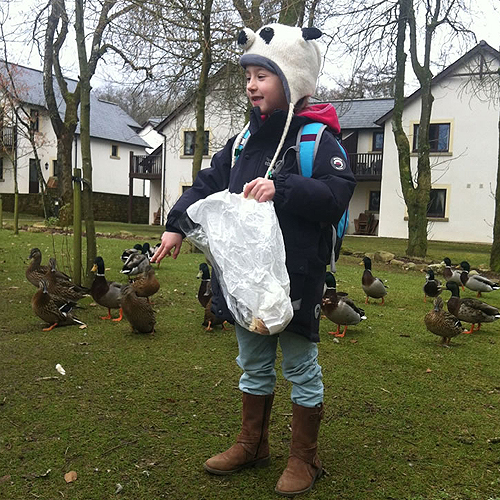 Feeding the ducks on a daily basis